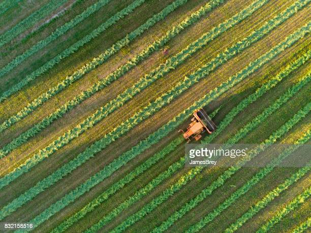 Agricultural harvesting at the last light of day, aerial view