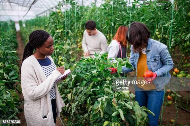 instituto agrícola - encuadre de tres cuartos fotografías e imágenes de stock