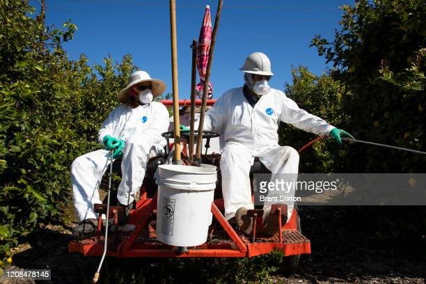 Agricultural laborers spray against insects and weeds inside the orchards of a fruit farm in Mesa, California. In this time of the Covid-19...