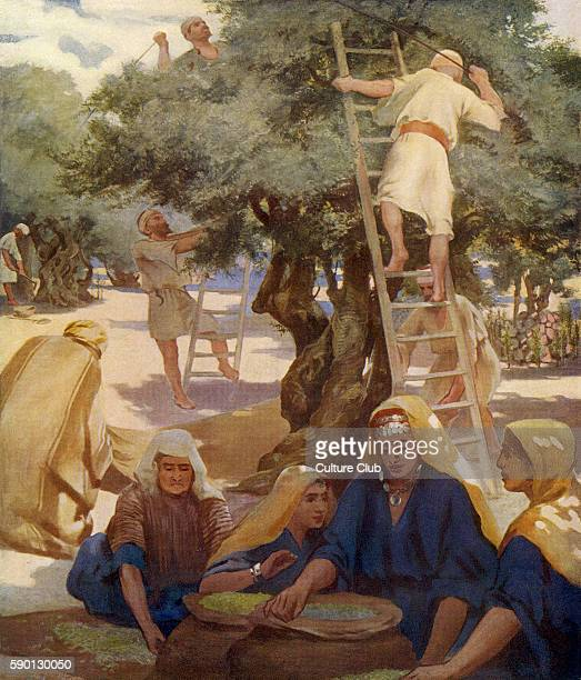 Agricultural labourers at work in an olive grove 1913 illustration based on travel in the Holy Land