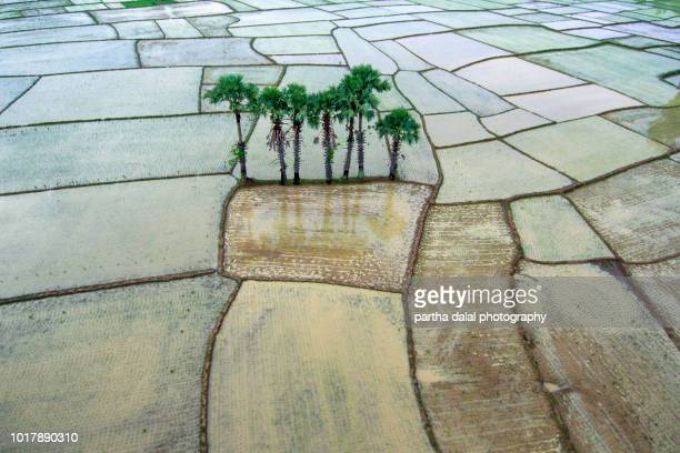 agricultural land aerial view - westbengalen stock-fotos und bilder