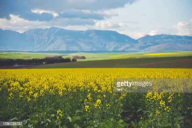 オーバーバーグの農業景観 - オーバーバーグ郡 ストックフォトと画像