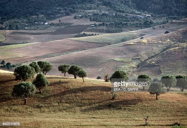 Agricultural landscape Kabylie Algeria