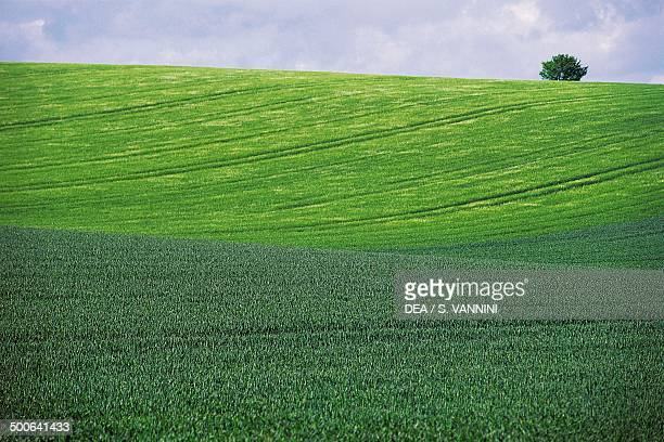Agricultural landscape near Pasques Burgundy France
