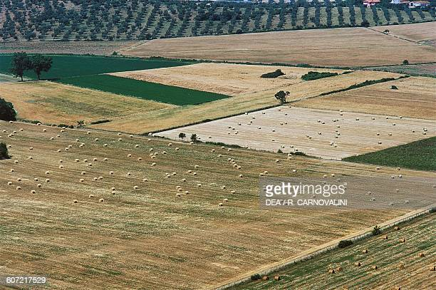 Agricultural landscape near Roselle Grosseto Maremma Tuscany Italy