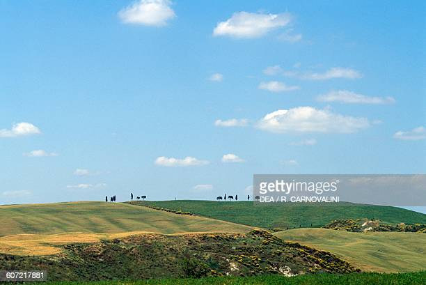 Agricultural landscape near Torrenieri Montalcino Val d'Orcia Tuscany Italy
