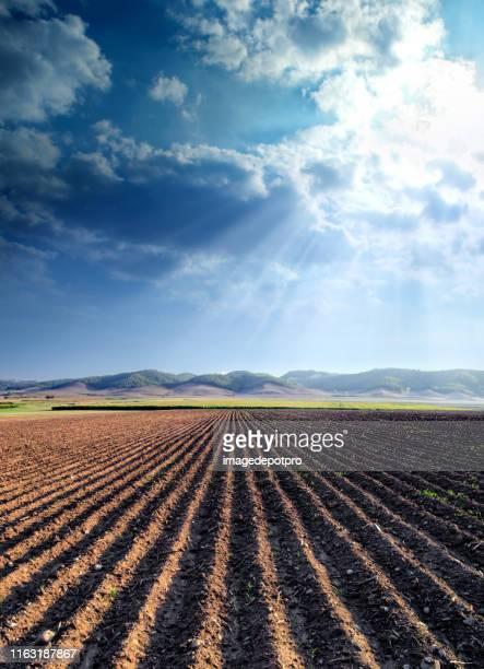 agricultural landscape of empty plowed field - terra coltivata foto e immagini stock