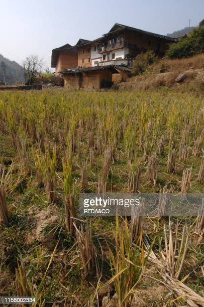 Agricultural landscape. Tulou. Fujian earth houses or Fujian earthen structures from Hakka people. Near Yong Ding. Fujan. China.