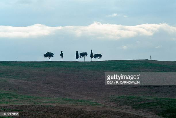 Agricultural landscape with cypresses and maritime pines in the background near Torrenieri Montalcino Val d'Orcia Tuscany Italy