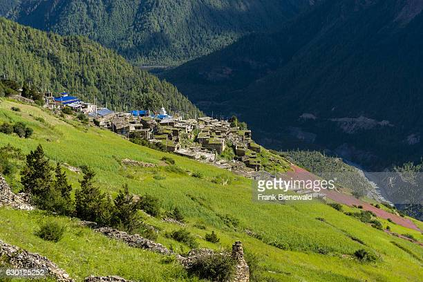 Agricultural landscape with pink buckwheat fields in blossom in the Upper Marsyangdi valley the village Ghyaru in the distance