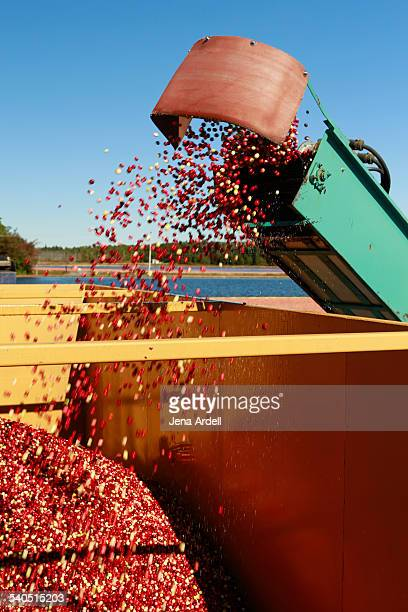 Agricultural Machinery Used to Harvest Cranberries