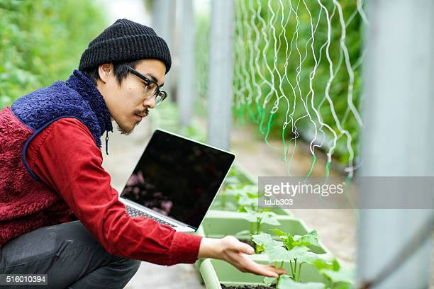 Agricultural researcher using a laptop computer in a greenhouse environment