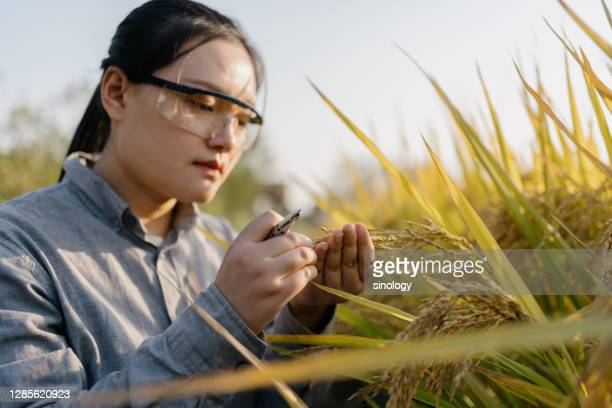 agricultural scientist working in farm - smart stock pictures, royalty-free photos & images