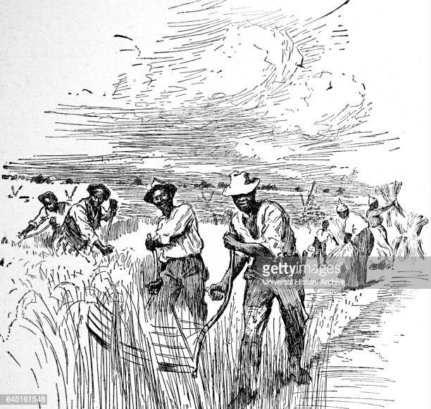 Agricultural slaves working in Virginia.