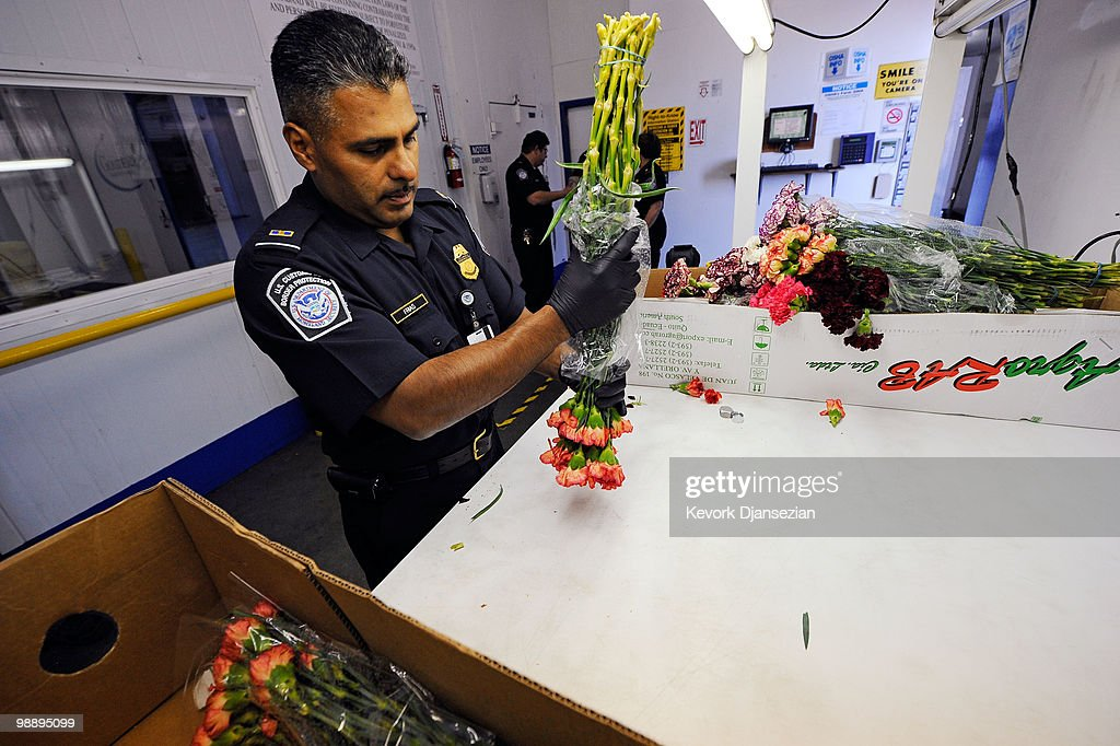 Agricultural specialist agent Jessie Frias of Customs and Border Protection carefully inspects roses shipped from Ecuador ahead of Mother's Day at a Customs and Border Patrol warehouse on May 6, 2010 in Los Angeles, California. Imported cut flowers are inspected to prevent pest and diseases from entering the United States. Mother's Day is the second busiest flower season after Valentine's Day.