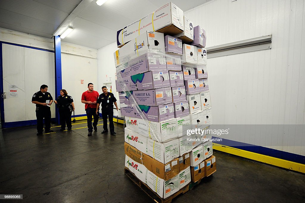 Agricultural specialist agents of Customs and Border Protection carefully inspect imported flowers shipped from Ecuador ahead of Mother's Day at a Customs and Border Patrol warehouse on May 6, 2010 in Los Angeles, California. Imported cut flowers are inspected to prevent pest and diseases from entering the United States. Mother's Day is the second busiest flower season after Valentine's Day.