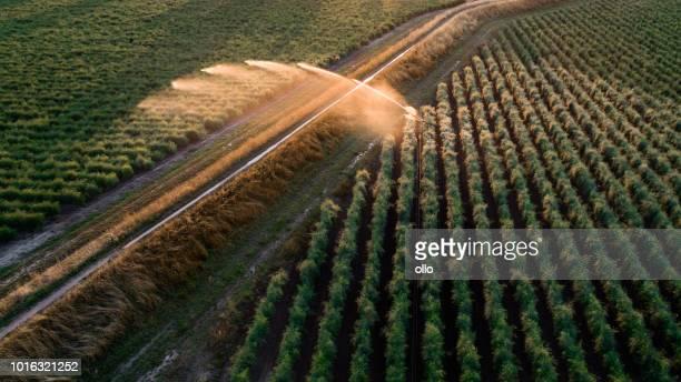 Landwirtschaftlichen Regner - Bewässerung Bereich, Luftbild