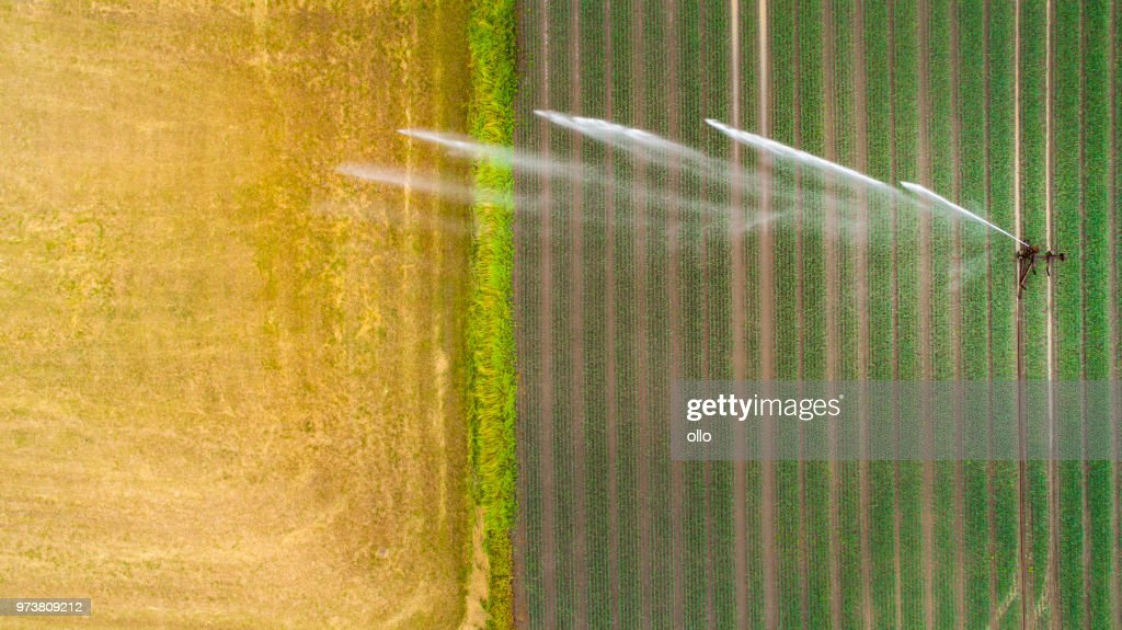 Agricultural sprinkler, wheat field : Stock Photo