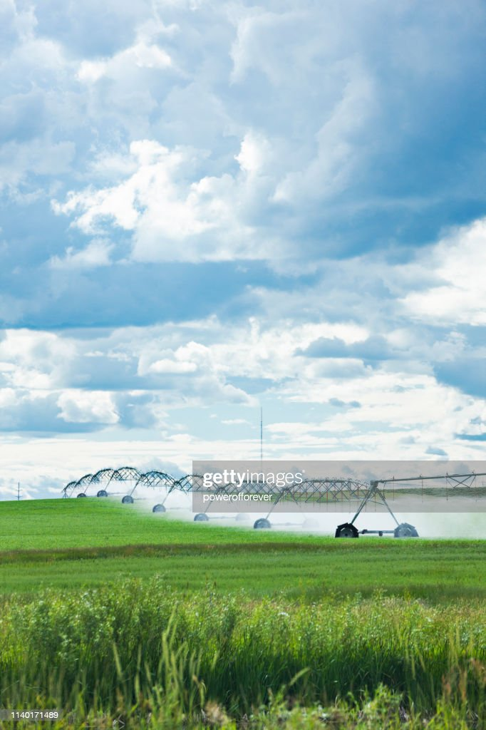 Agricultural Sprinklers Watering a Field in Rural Alberta, Canada : Stock Photo