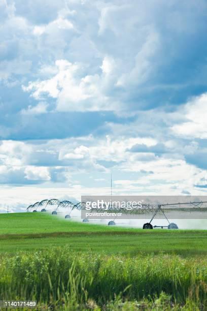 Agricultural Sprinklers Watering a Field in Rural Alberta, Canada