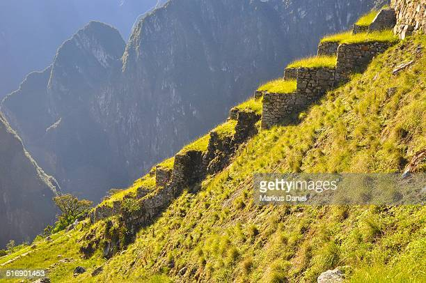 "agricultural terraces in machu picchu - ""markus daniel"" stock pictures, royalty-free photos & images"