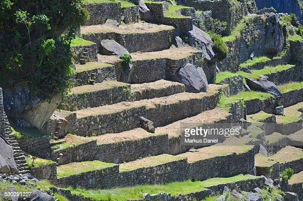 Agricultural Terraces in Machu Picchu