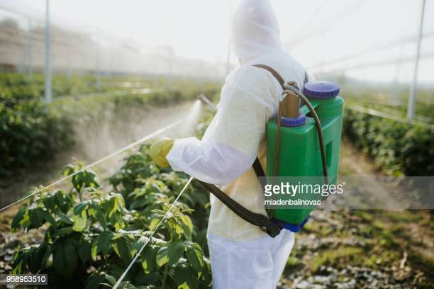 agricultural worker takes care of his estate - pest stock photos and pictures