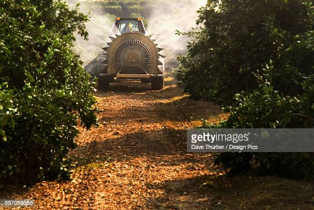 agriculture - a fan jet sprayer applies a copper fungicide in a navel orange grove in late autumn to prevent brown rot from occurring later in the growing season / tulare county, california, usa. - navel orange stock photos and pictures
