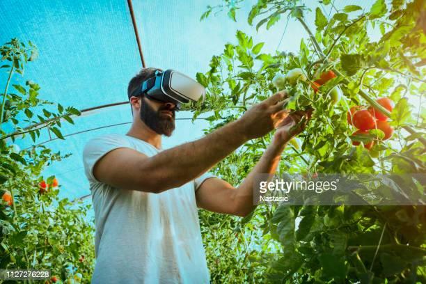 農業とスマート農業の温室効果の概念 - スマート農業 ストックフォトと画像