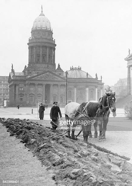 Agriculture at Gendarmenmarkt in Berlin cultivating useful plants on a strip of field on the square for the supply of the population at the back is...