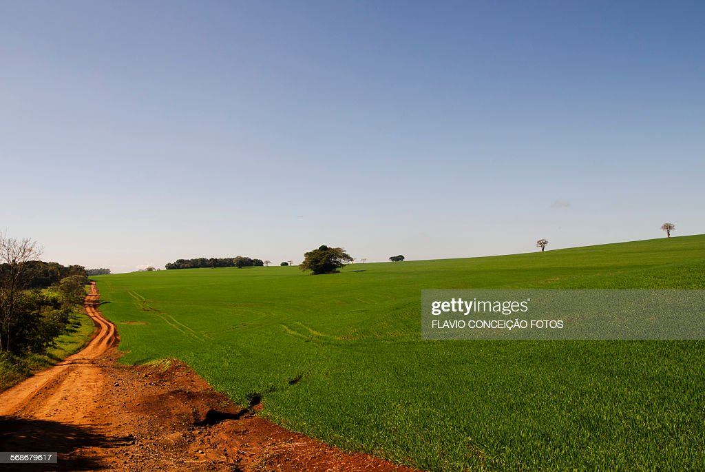 Agriculture Brazil : Stock Photo