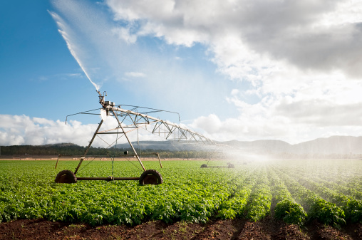 Agriculture: Crop Irrigation - gettyimageskorea