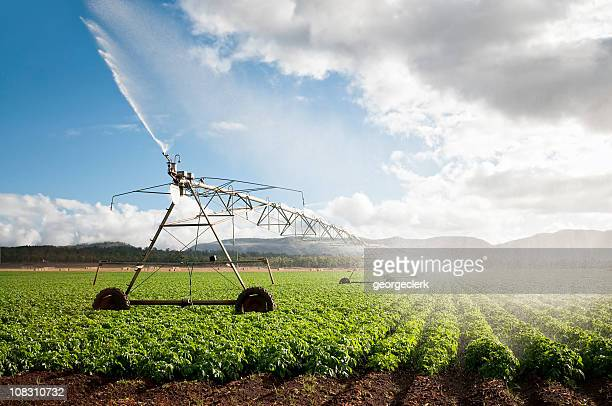 agriculture: crop irrigation - gewas stockfoto's en -beelden