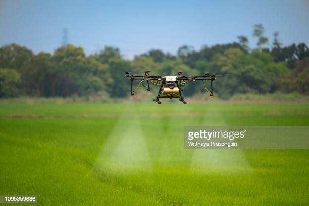 agriculture drone fly to sprayed fertilizer on the rice fields - drone photos et images de collection