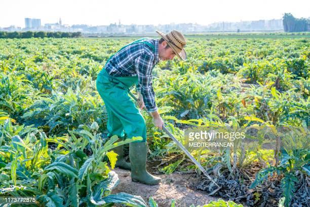 アルティコッケ畑でゾーイを保持する農業農家 - 耕す ストックフォトと画像