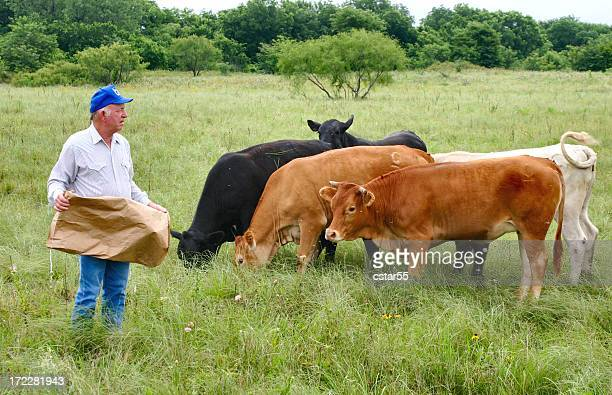 Agriculture: Farmer or rancher in field Feeding Cattle