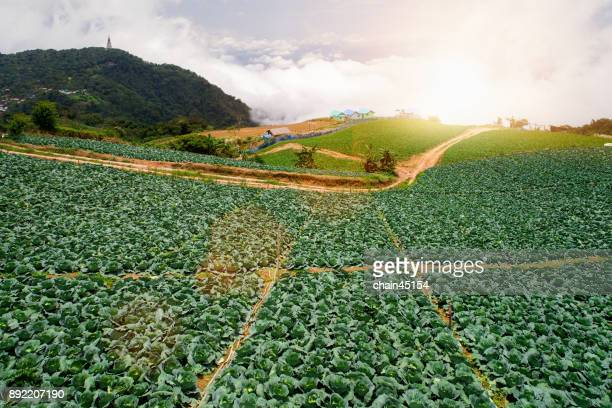 Agriculture farming on hill.