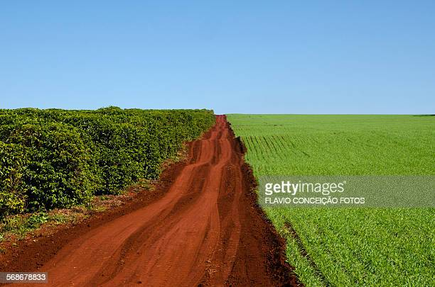 agriculture farms Brazil