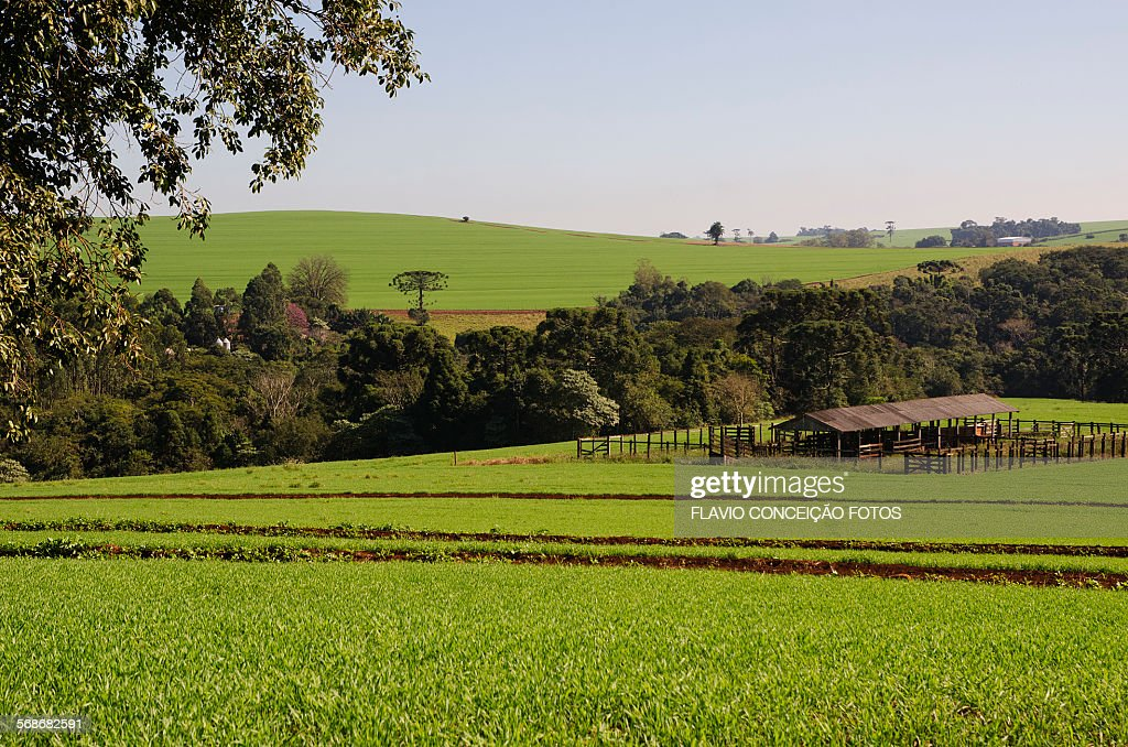 Agriculture forest Brazil : Stock Photo