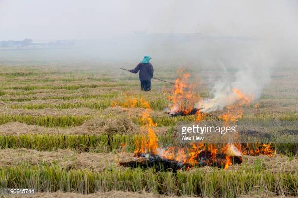 agriculture: harvested paddy field in selangor, malaysia - burning stock pictures, royalty-free photos & images