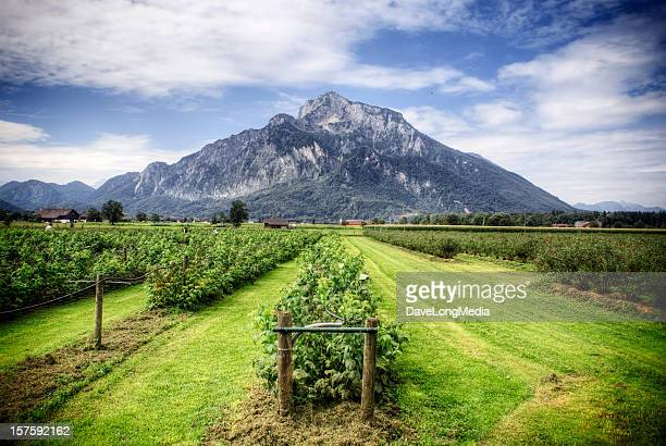 agriculture in europe - strawberry fields stock photos and pictures