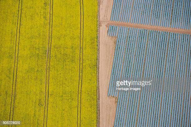 Agriculture in yellow and blue Wood Bevington Farm Salford Priors Warwickshire 2007 Aerial view Polytunnels or linear cloches adjoining a flowering...