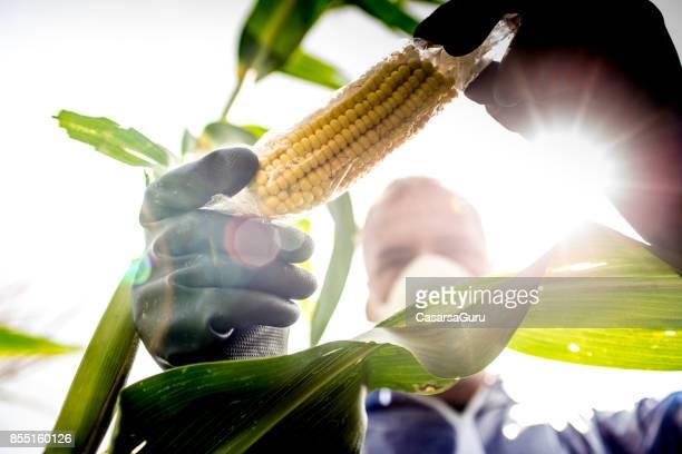 Landbouw Inspector beheersing van het gewas