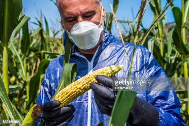 Agriculture Inspector Controlling the Crop