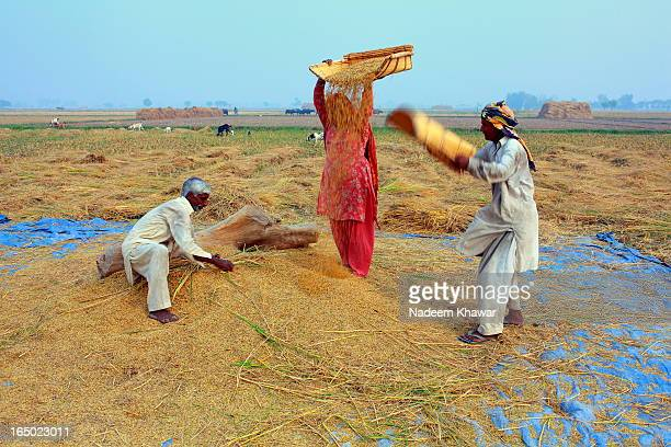 CONTENT] Agriculture is the backbone of Pakistan and Rice Threshing is common practice in the fields of villages in PunjabPakistan small formers use...