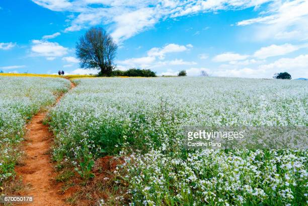 agriculture land in myanmar - caroline pang stock pictures, royalty-free photos & images
