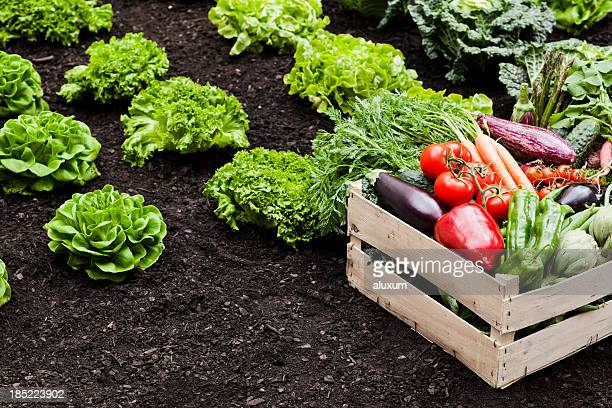 agriculture - garden harvest stock pictures, royalty-free photos & images