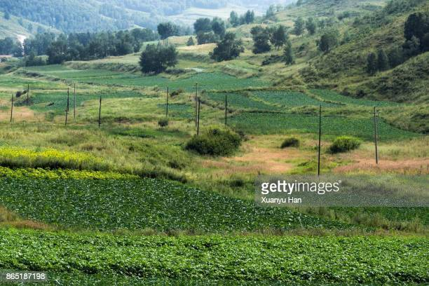 agriculture rural landscape - hebei province stock pictures, royalty-free photos & images