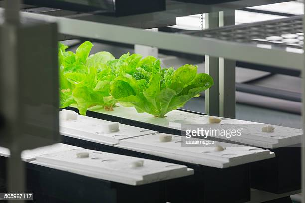 Agriculture Tech