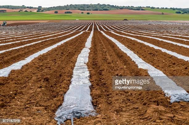 Agriculture under plastic